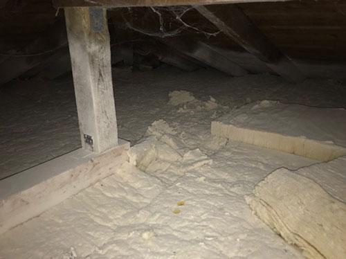 Ausgebrachtes Pulver VERMINEX PRO auf einem Dachboden