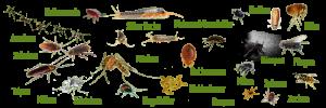 Bild verschiedener fliegender und kriechender Insekten