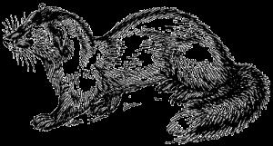 gezeichnetes Bild schwarzweiß Steinmarder