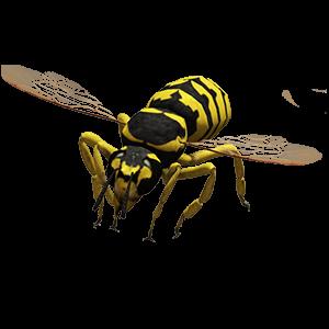 Bild einer Wespe sitzend